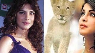 Priyanka Chopra adopted a lion