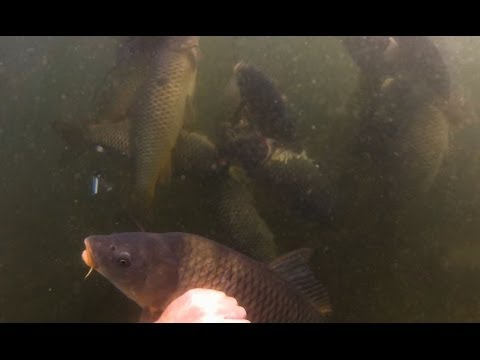 Spearfishing Carp in Wisconsin 2013 Trip 3