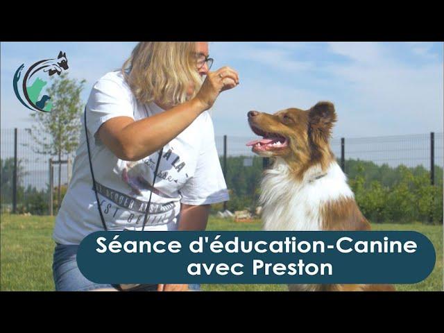 Education avec Preston   Clinique vétérinaire Saint Roch