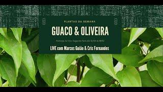 Conversando sobre Plantas Medicinais com Marcos Guião - Guaco e Oliveira