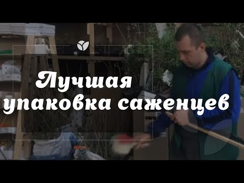 Agro-Market.net   Упаковка саженцев деревьев   Честное видео со склада