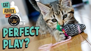 The Perfect Way to Play With Your Cat?