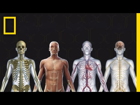 human-body-101-|-national-geographic