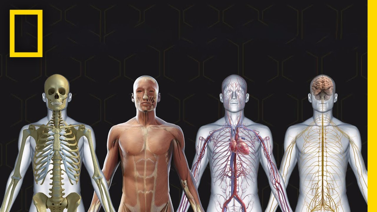 Human Body 101 | National Geographic - YouTube
