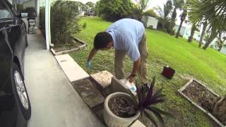 Pest Control | Big Headed Ants | Exterminator In Vero, Jupiter | Nozzle Nolen