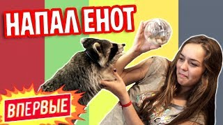 Download ВПЕРВЫЕ: 24 ЧАСА С ЕНОТОМ ДОМА :) Mp3 and Videos