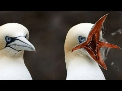أغرب 10 سلالات طيور في العالم - لن تصدق وجودها !!