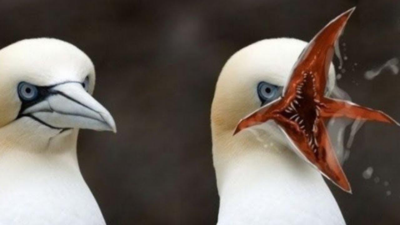 لن تصدق  وجودها أغرب 10 سلالات طيور في العالم
