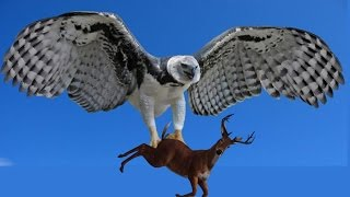 Animal Planet - Largest Birds of Prey in the World - Best Documentary