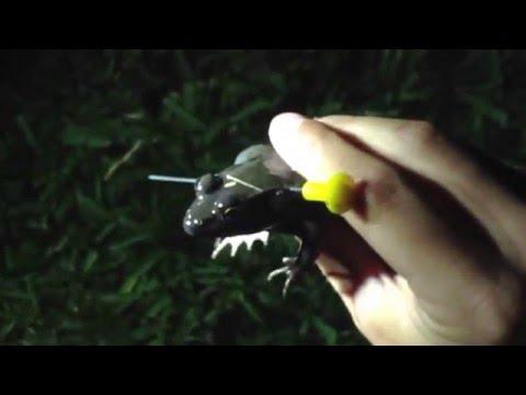 Blow Gun Frog Gigging