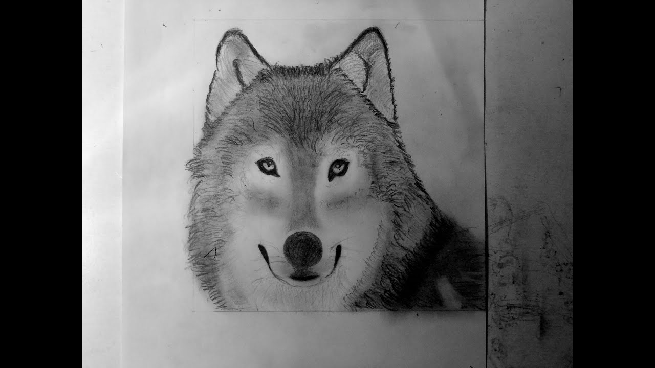 Comment dessiner un loup speed drawing youtube - Dessin de loup simple ...