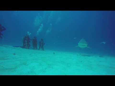 Bullen Haie in Mexico