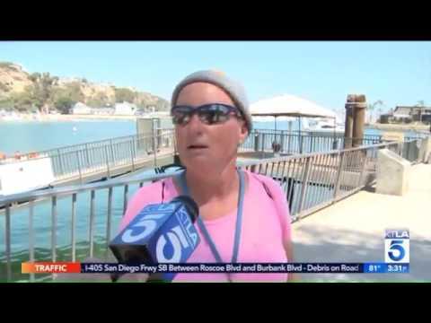 Baby Gray Whale Swims Into Dana Point Harbor; OCSD Responds