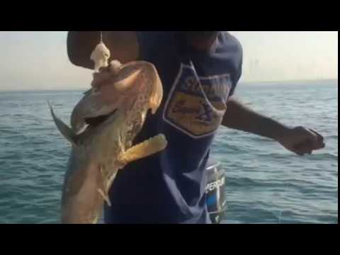 hamour and Sheri hunt using hand line, Abu Dhabi Offshore