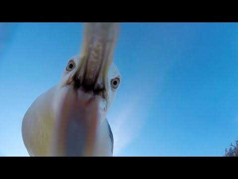 GoPro Awards: Seagull Theft - ...