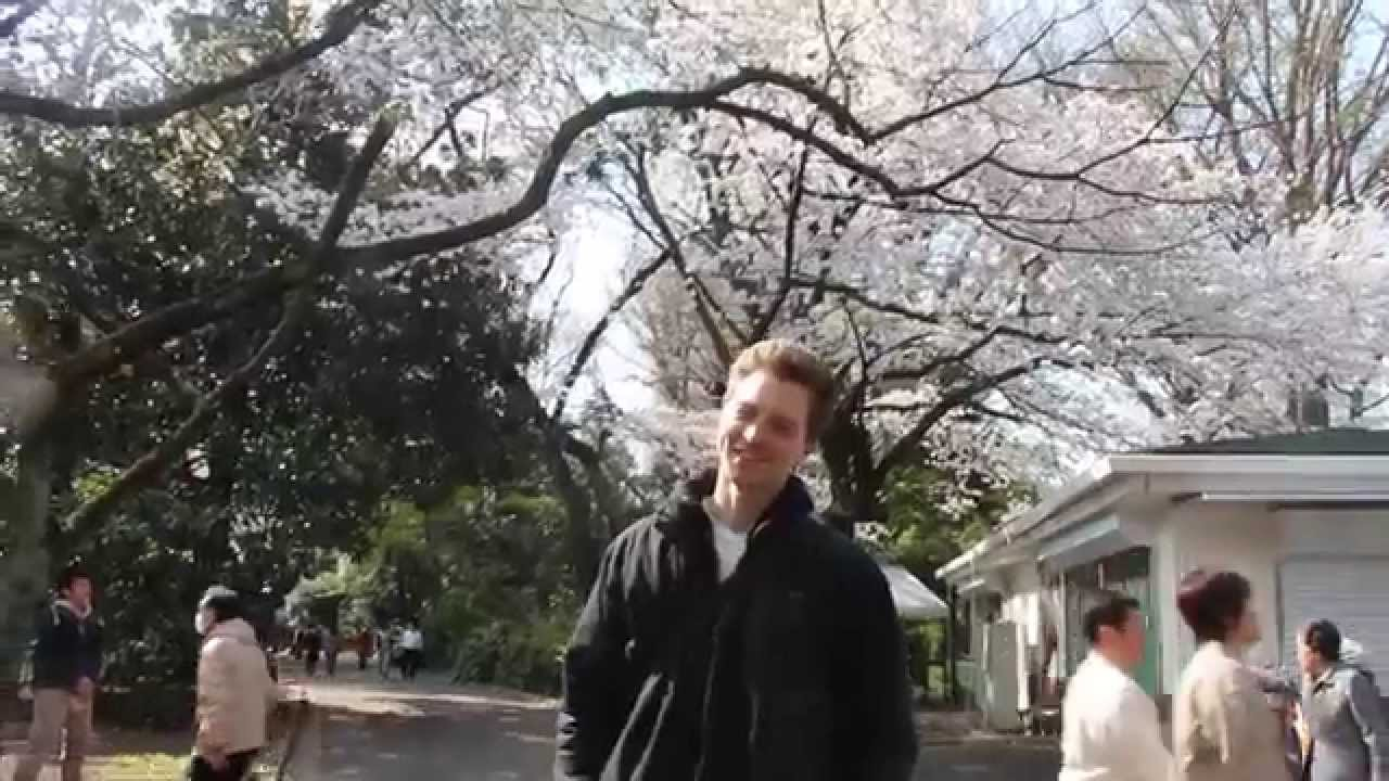 Япония. Ханами в Токио. Сакура, фото с девушками, весеннее ...
