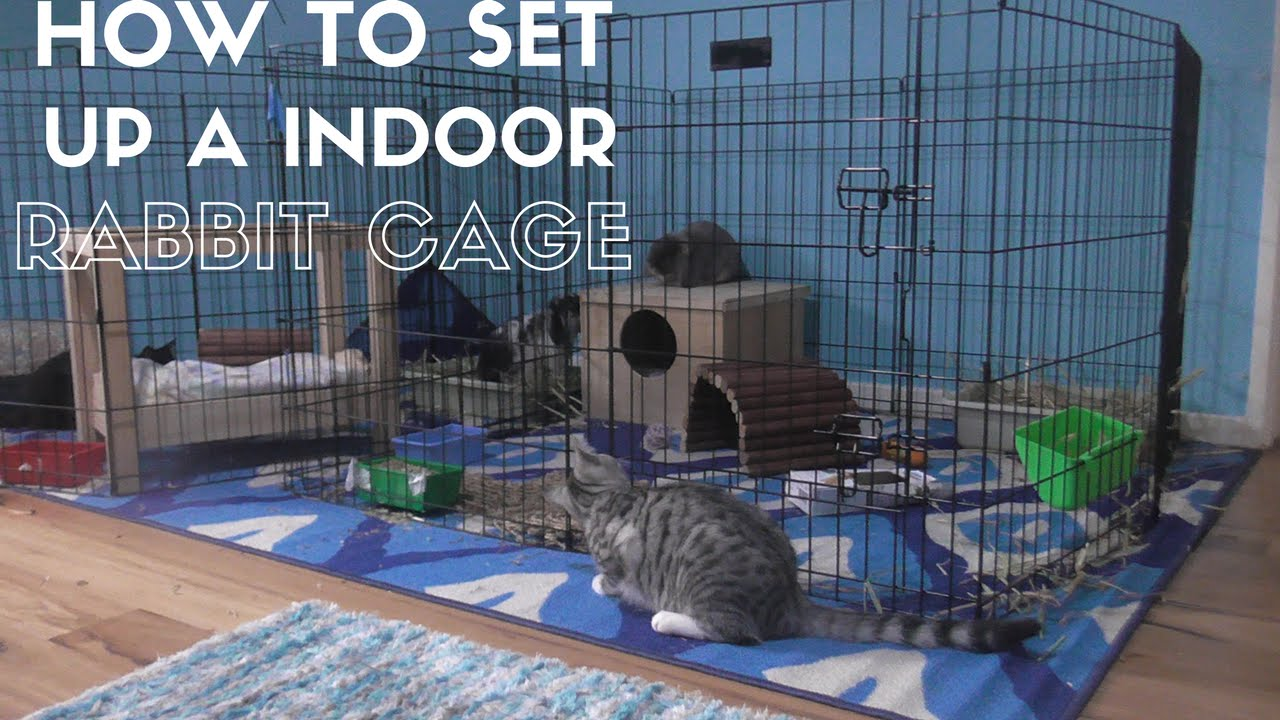 how to set up a indoor rabbit cage   youtube