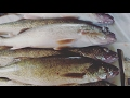 How to Filet a Walleye, remove all rib bones and skin. NO Bones! Best technique