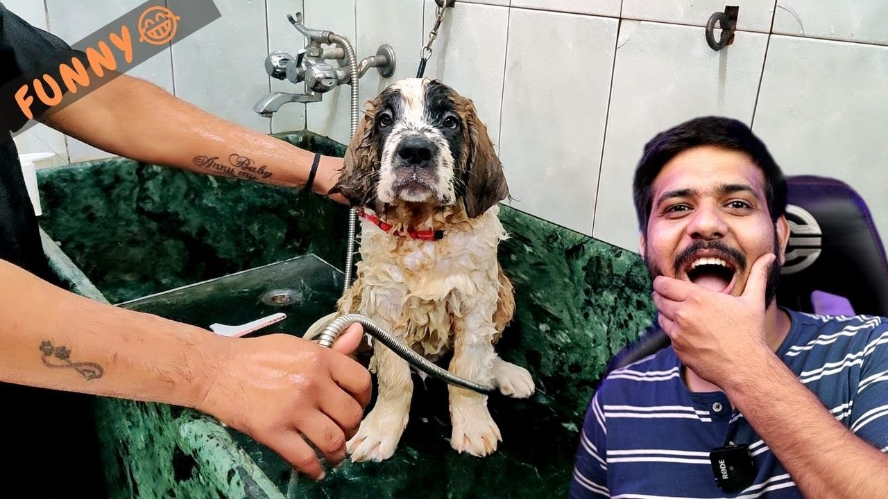 BRUNO'S FIRST BATH 😂