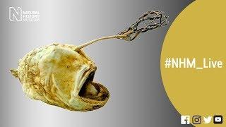 What lies beneath?   #NHM_Live thumbnail