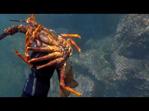 [Part 2] Of Our Diving Roadtrip To Jacksons Bay NZ For Crayfish
