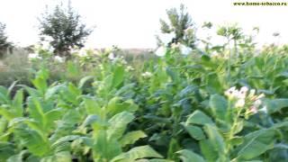 Часть 5.1. Подготовка к уборке урожая 22 Июля сезон 2014