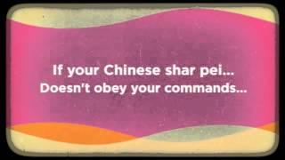 Chinese Shar Pei Behavior