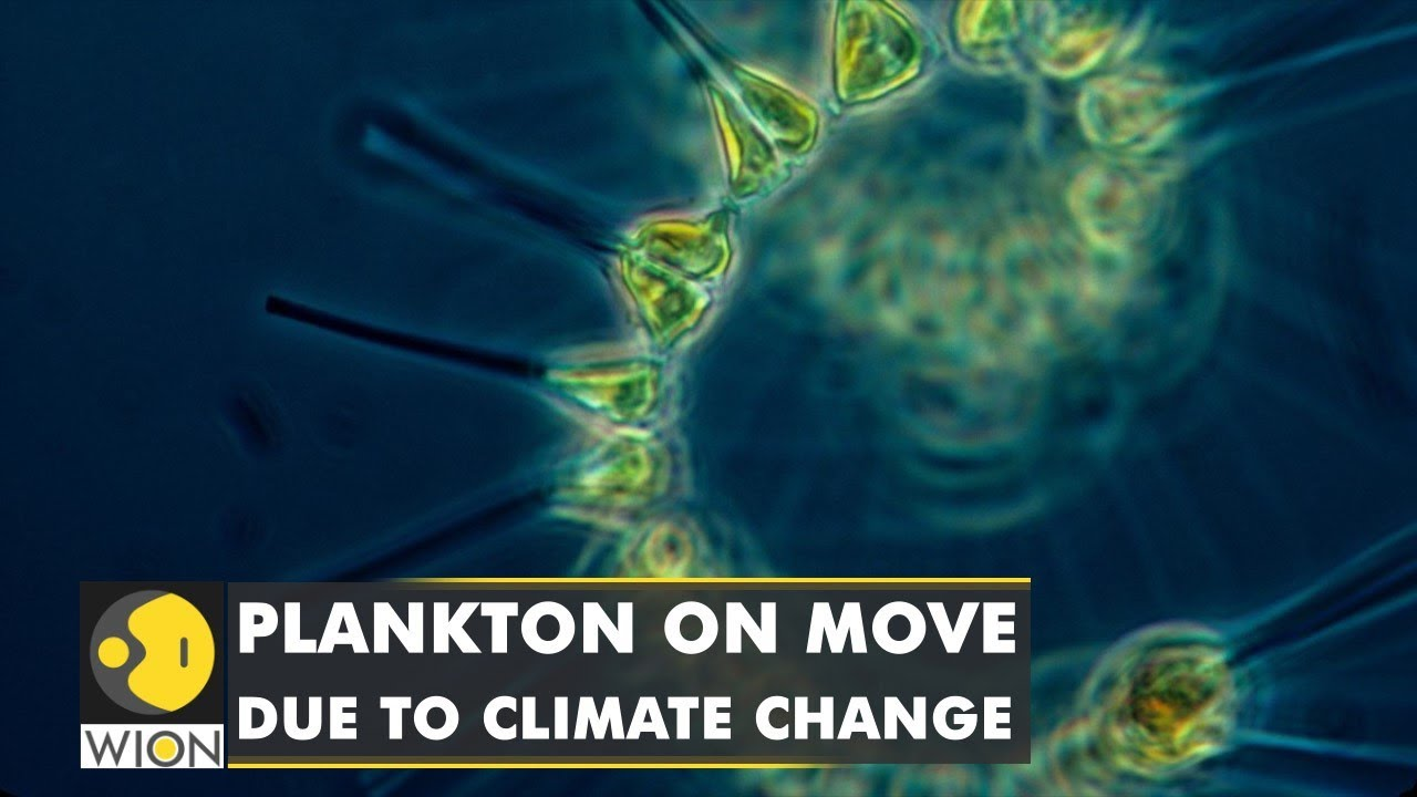Plankton migrate due to climate change, could cause 17% dip in marine life | Latest English News - WION