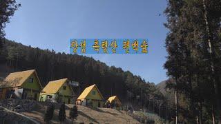 장성축령산편백숲 2021 (4k)
