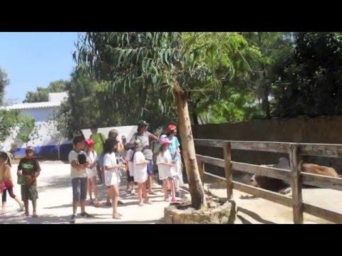Colónia de Ferias 2010 CLDS Casas do Soeiro