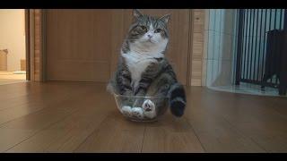 ボウルとねこ。-Mixing bowl and Maru.-