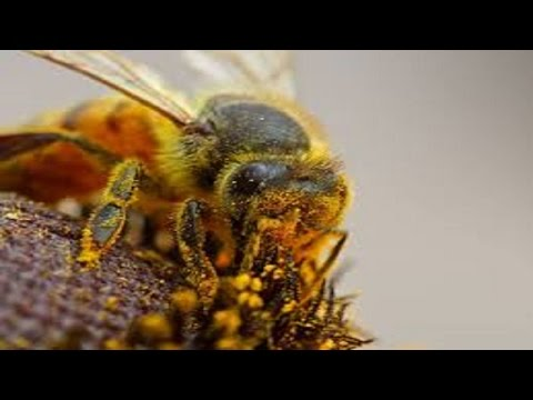 Bees And Social Insects: Highly Complex Chemical Communications
