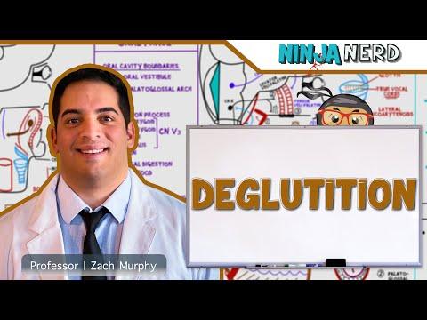 Gastrointestinal   Deglutition (Swallowing)