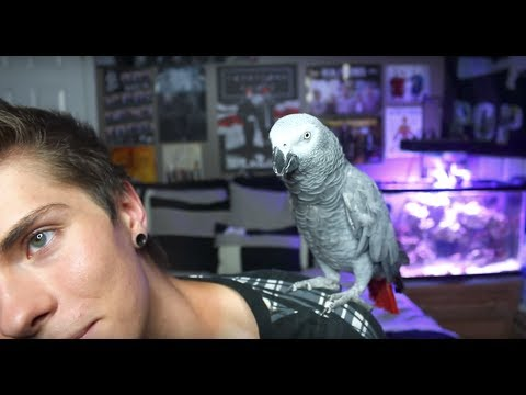 Things You Can Do With a Bird! PART 2!!!