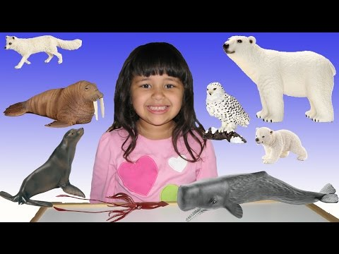20 Arctic Animals Wildlife ZOO Animal Toys Learn Animals Educational for Kids