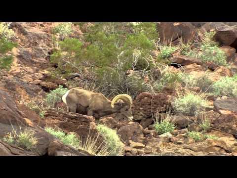 2013/2014 Arizona Wildlife Views - Show 2
