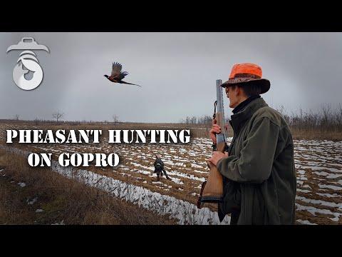 Vanatoare La Fazan Pe GoPro (Pheasant Shooting On GoPro)