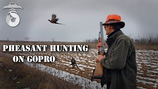 Pheasant hunting on GoPro