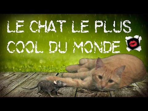Le chat le plus zen du monde (montage vidéo)