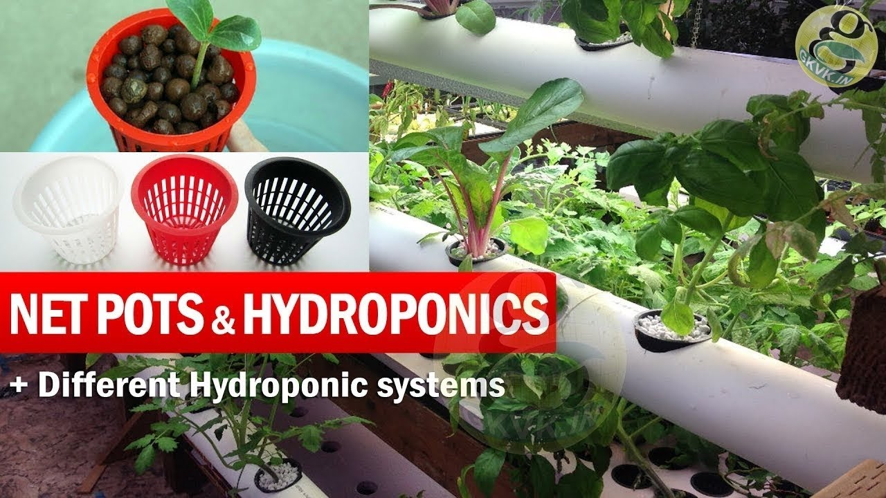 What Are Net Pots And Hydroponic System Explained Benefits Of Net