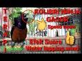 Terapi Konin Macet Bunyi Konin Gacor  Mp3 - Mp4 Download