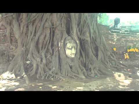 Ayutthaya - The Head Of Buddha In Wat Mahathat - Thailand (H