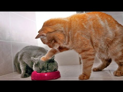 AFV Videos ► Funny Cute Cats Compilation January 2016 ► F5 Media