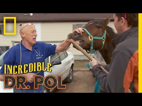 Hookin' Horse Teeth | The Incredible Dr. Pol