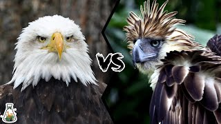 BALD EAGLE VS PHILIPPINE EAGLE - Which is the strongest?