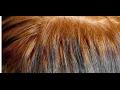 تفسير رؤية الحناء على الشعر وصبغ اليد في المنام
