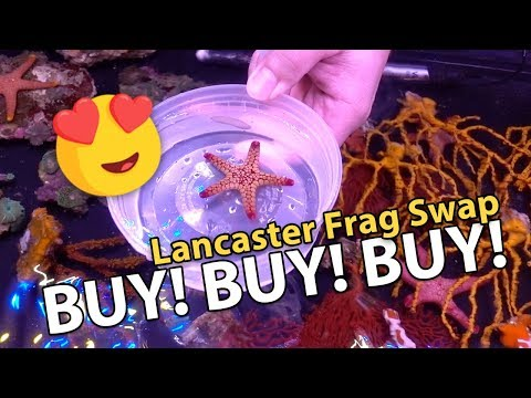 PAID $100 FOR ONE CORAL FRAG?! {Frag Swap @ Lancaster PA}