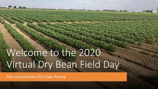 2020 CSU Crops Testing Virtual Bean Field Day