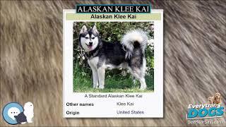 Alaskan Klee Kai  Everything Dog Breeds