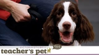 Loose-Leash Walking Inside | Teacher's Pet With Victoria Stilwell